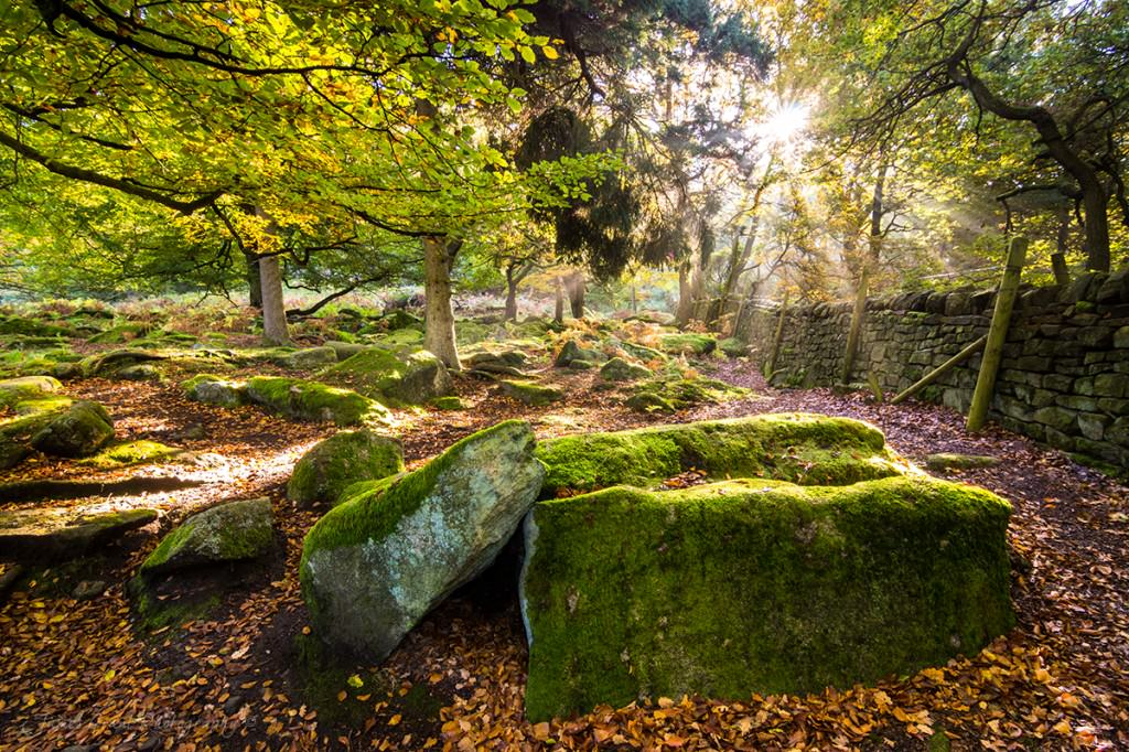 Padley Gorge - Sun rays breaking through the mist - Peak District