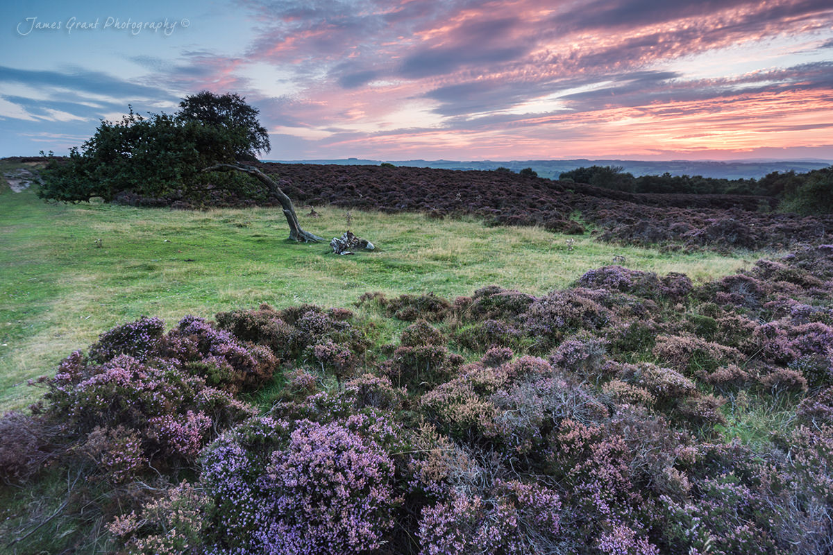 Stanton Moor Leaning Tree - Peak District Photography
